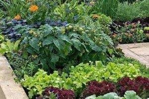 Copcat OÜ Copcat, konteinertaimlad, taimede istutus, taimede istutamine
