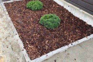 Haljastus Plus OÜ Haljastus Plus, haljastustööd; taimede istutamine; istutamine; haljastus