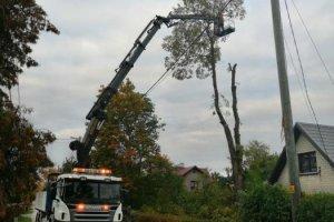 ÕUNASE EHITUSE OÜ ÕUNASE EHITUSE, puu langetamine, puude langetamine, ohtliku puu langetus