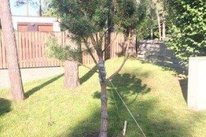 TERRA MAASTIKUEHITUS OÜ TERRA MAASTIKUEHITUS, Puude istutamine, puude ümberistutamine
