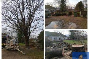 DERO PUIT OÜ DERO PUIT, ohtlikke puude langetus; ohtlikute puude langetus; haljastustööd; ohtlikute puude langetamine