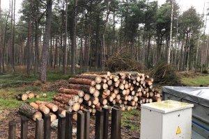 Metsaehitus OÜ Metsaehitus